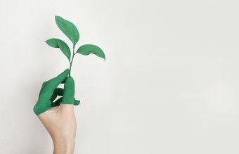 Die große Transformation? Auf dem Weg in die Nachhaltigkeit.